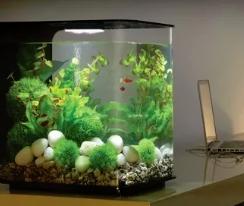 Как выбрать аквариумы для рыбок?