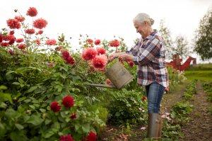 Преимущества частных домов для престарелых